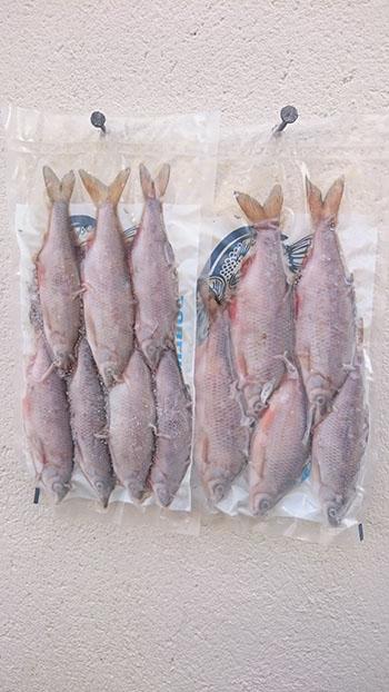Pike Baits | Frozen Fish Bait Dublin | Frozen Bait